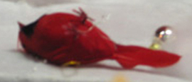 Dead_cardinal